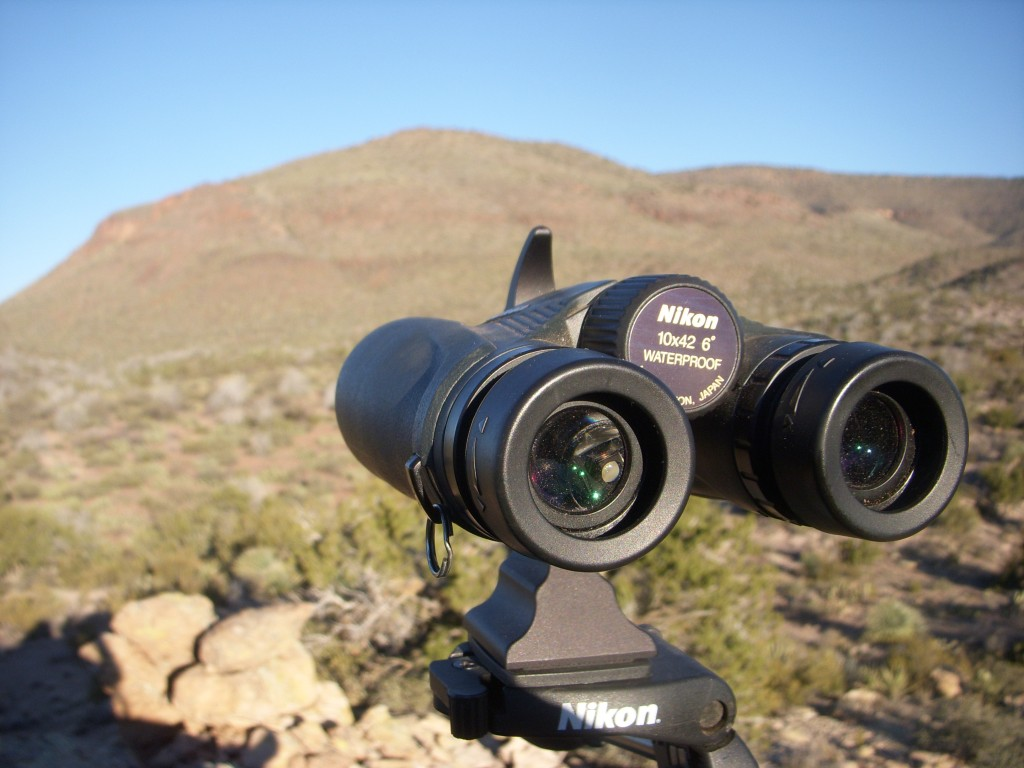 Glassing for Javelina
