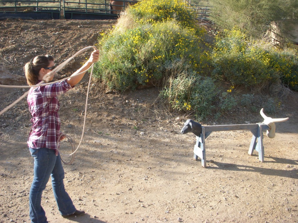 Roping Cows