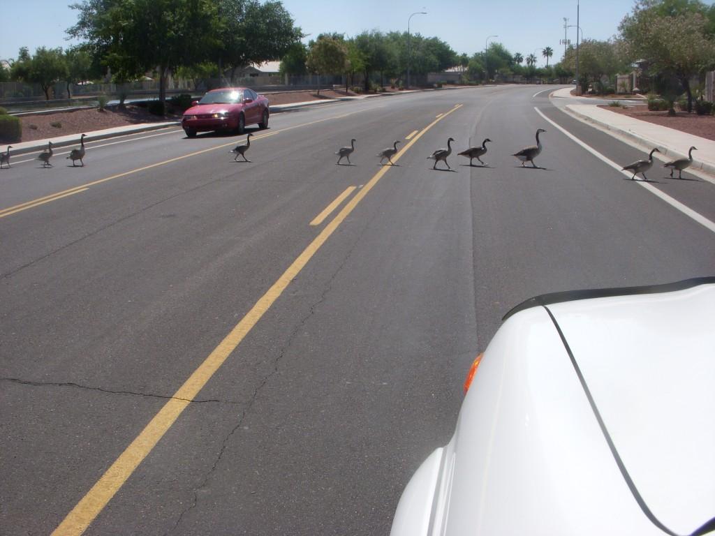 Arizona Traffic Jam