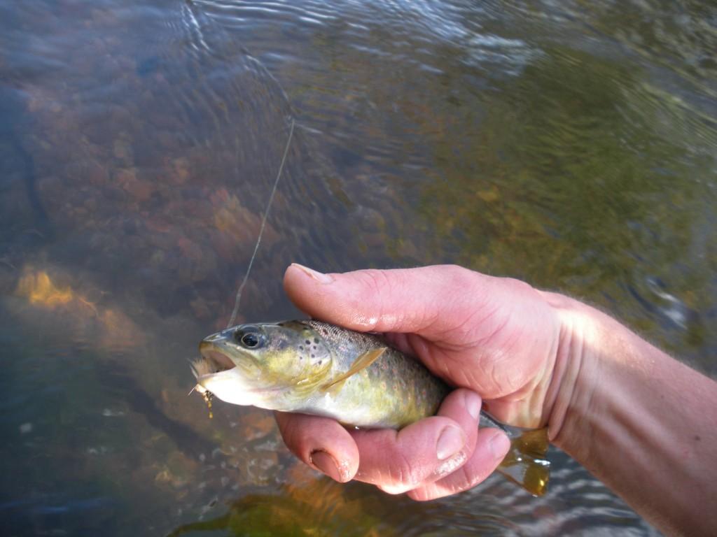 JohnMark's Fish