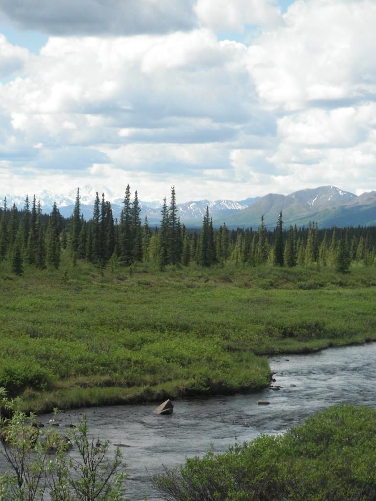 Alaska Small Stream