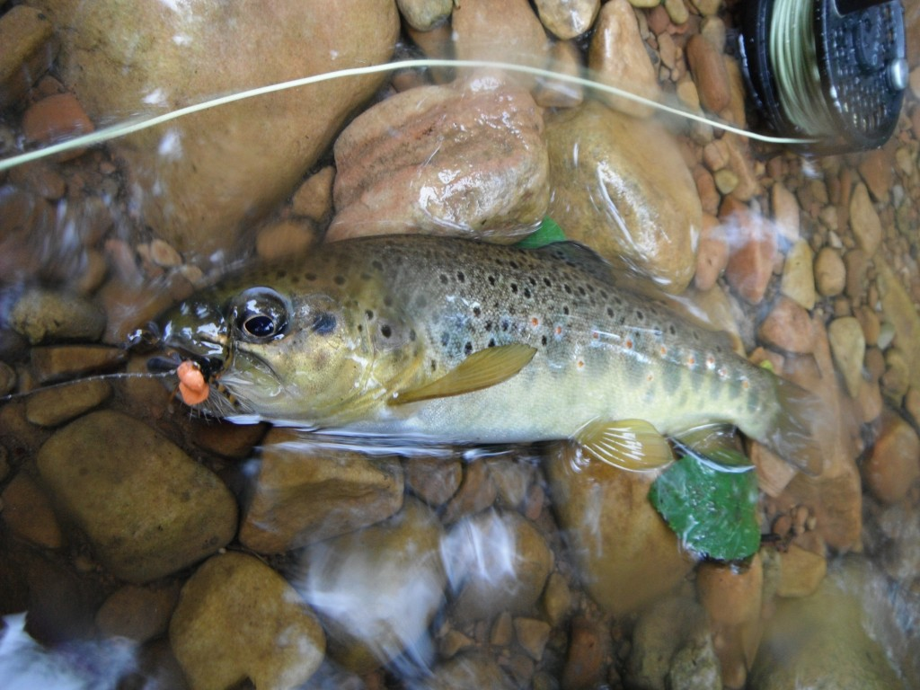 Small Stream Brown