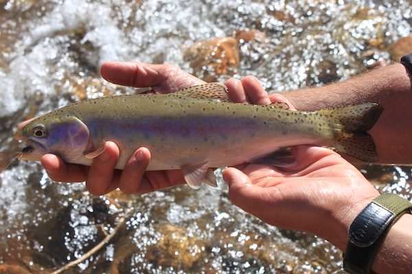 28 - Colorado River Rainbow