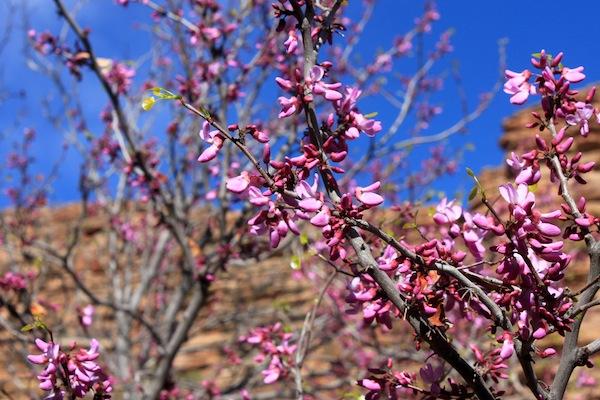 45 - Flowering Trees