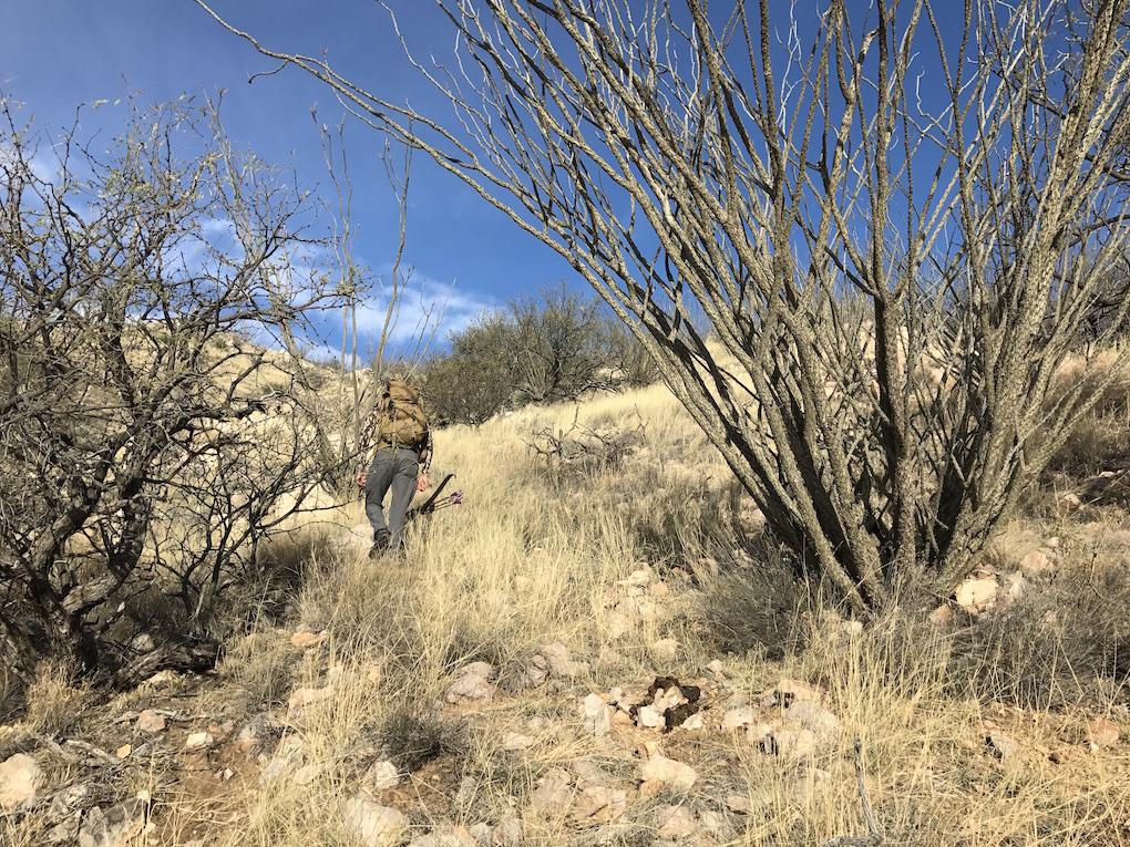 Javelina Hunting