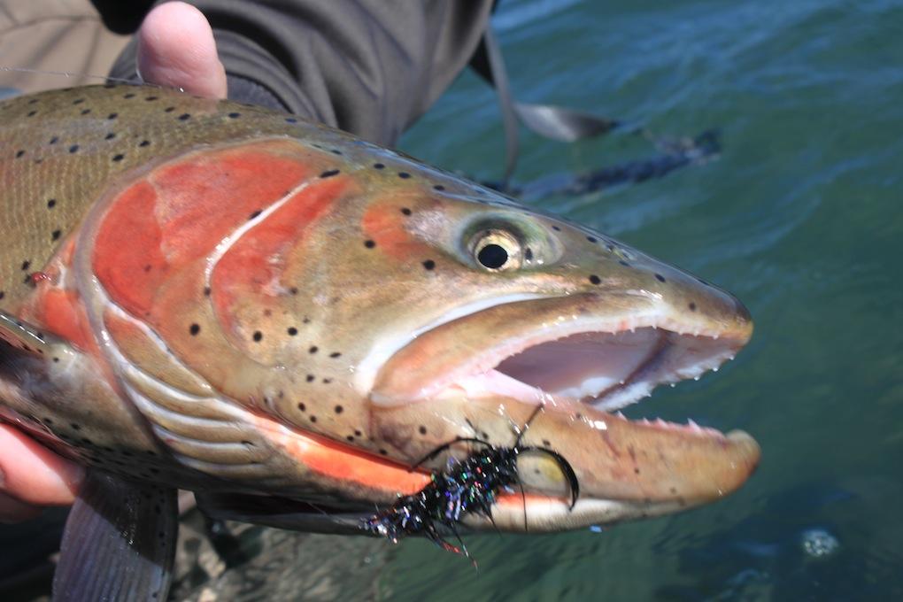 7 - Landon Fish