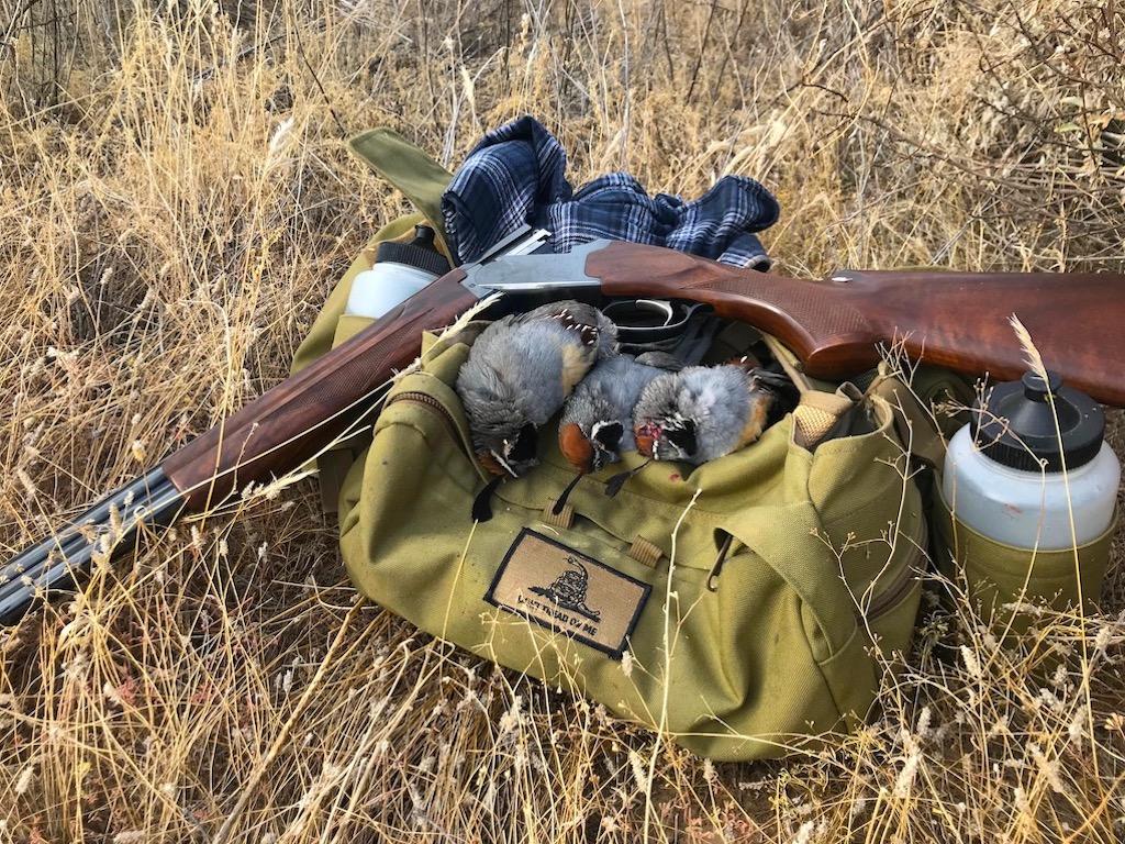 Arizona Gambel's quail