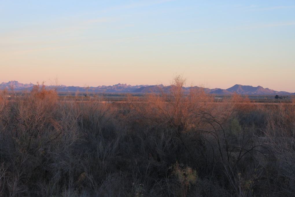 Gila River bottom brush