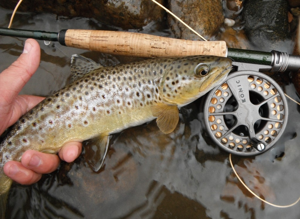 Colorado fly fishing the arkansas river arizona for Trout fishing in arkansas