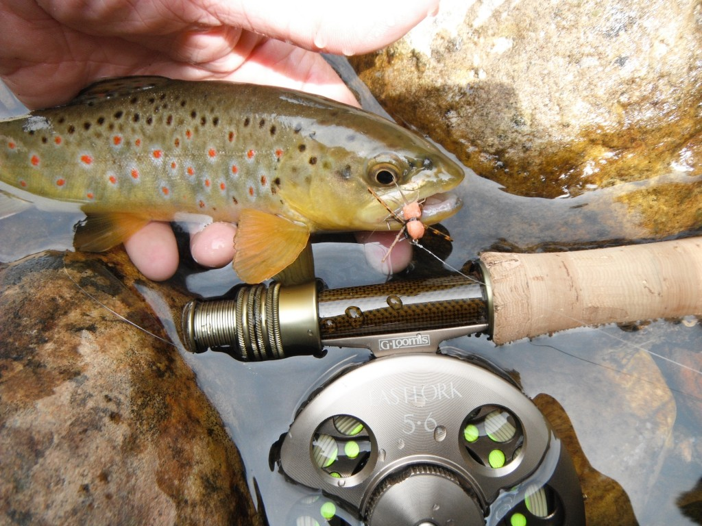 Arizona Brown Trout