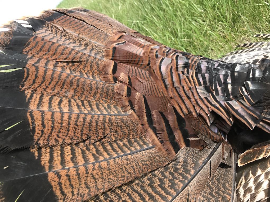 Missouri Turkey Hunting