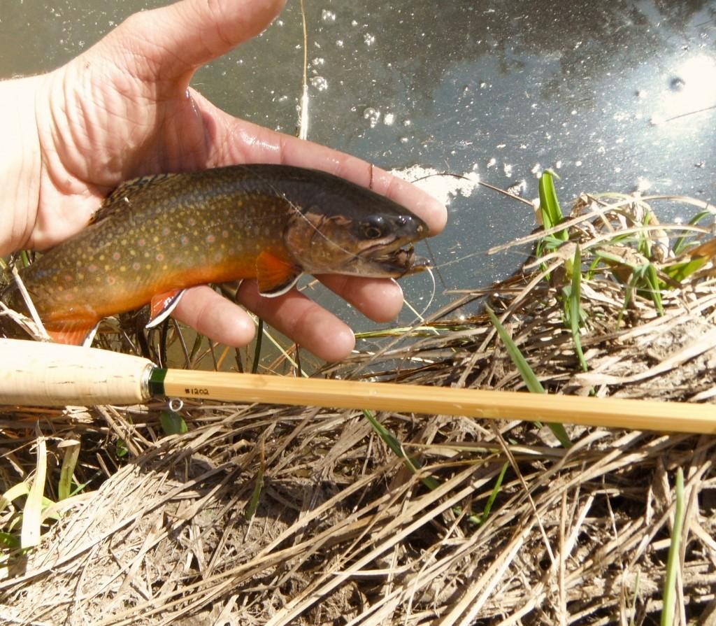 Fall River Fly Rod