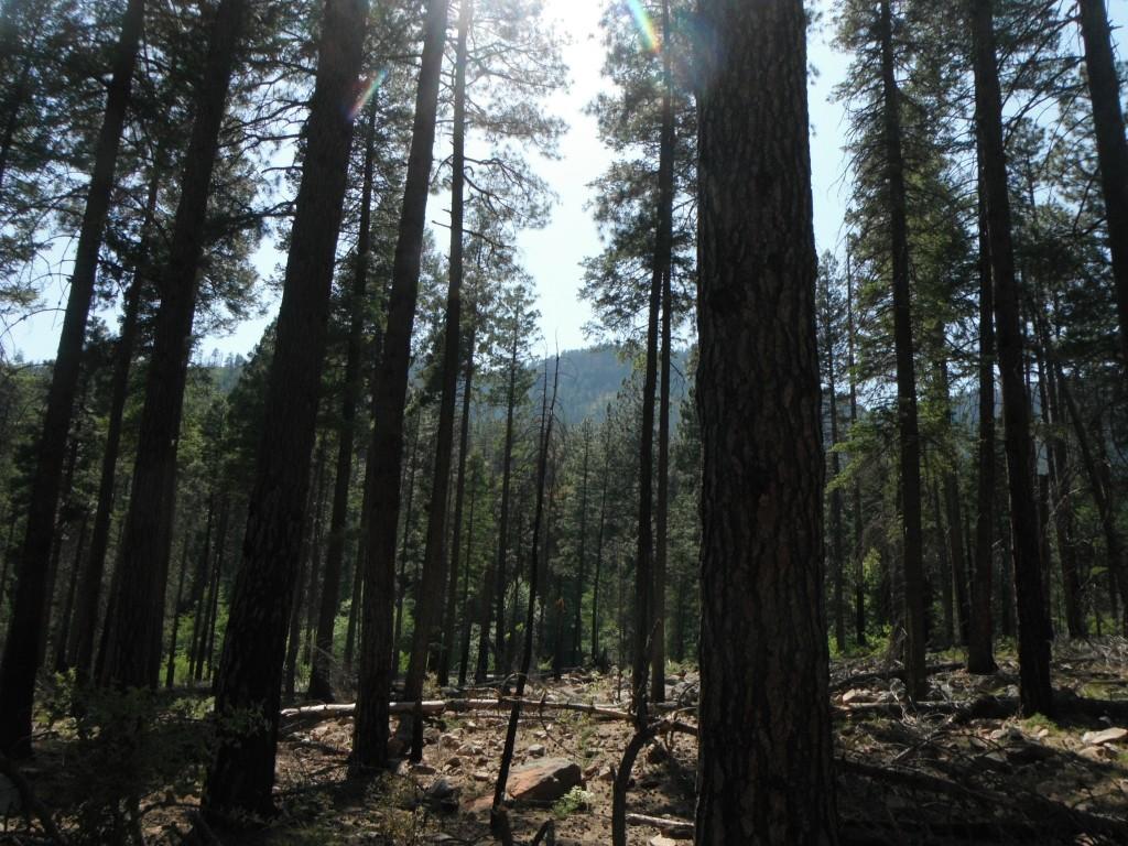 AZ Forest