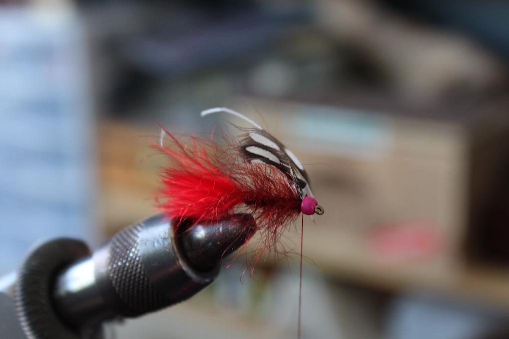 Frye Creek Special