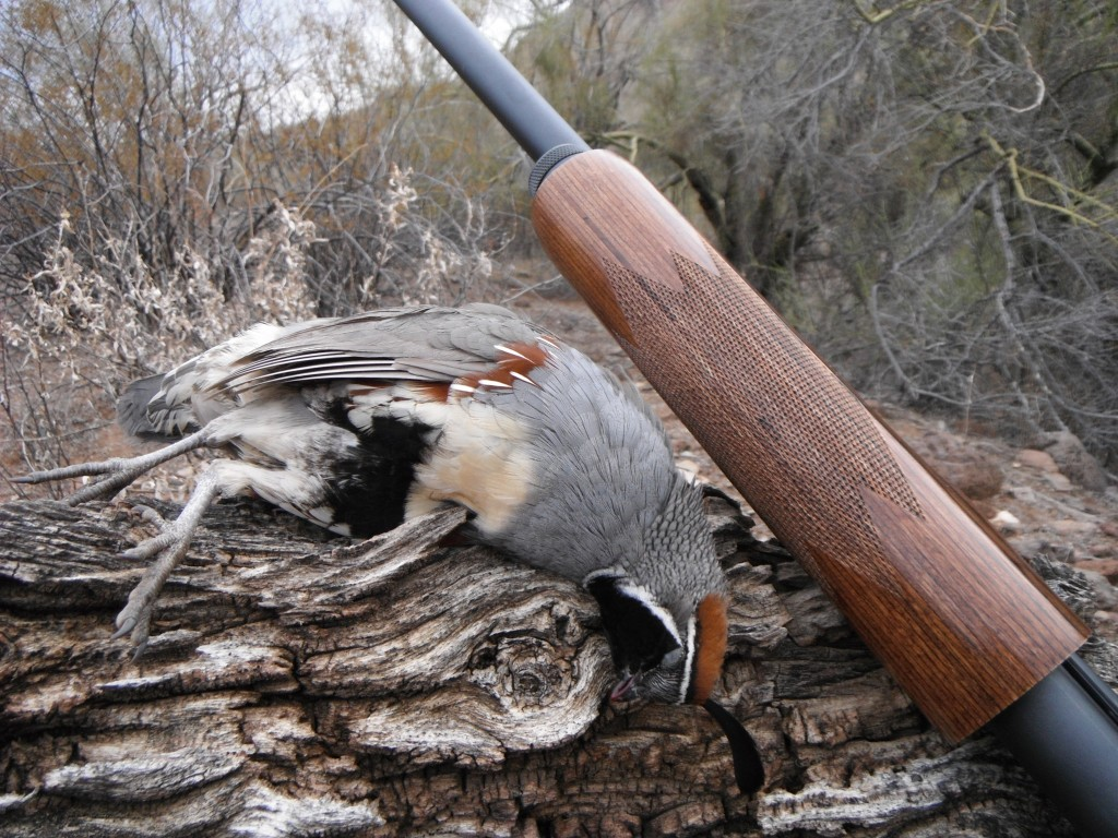 Arizona Quail Season