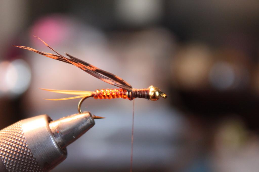 Gambel's Stonefly 10