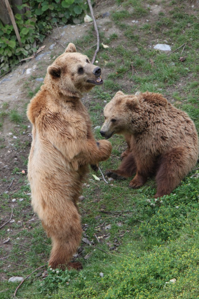 The Bears of Bern Switzerland