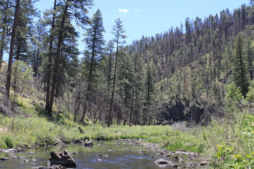 White Mountain Creek