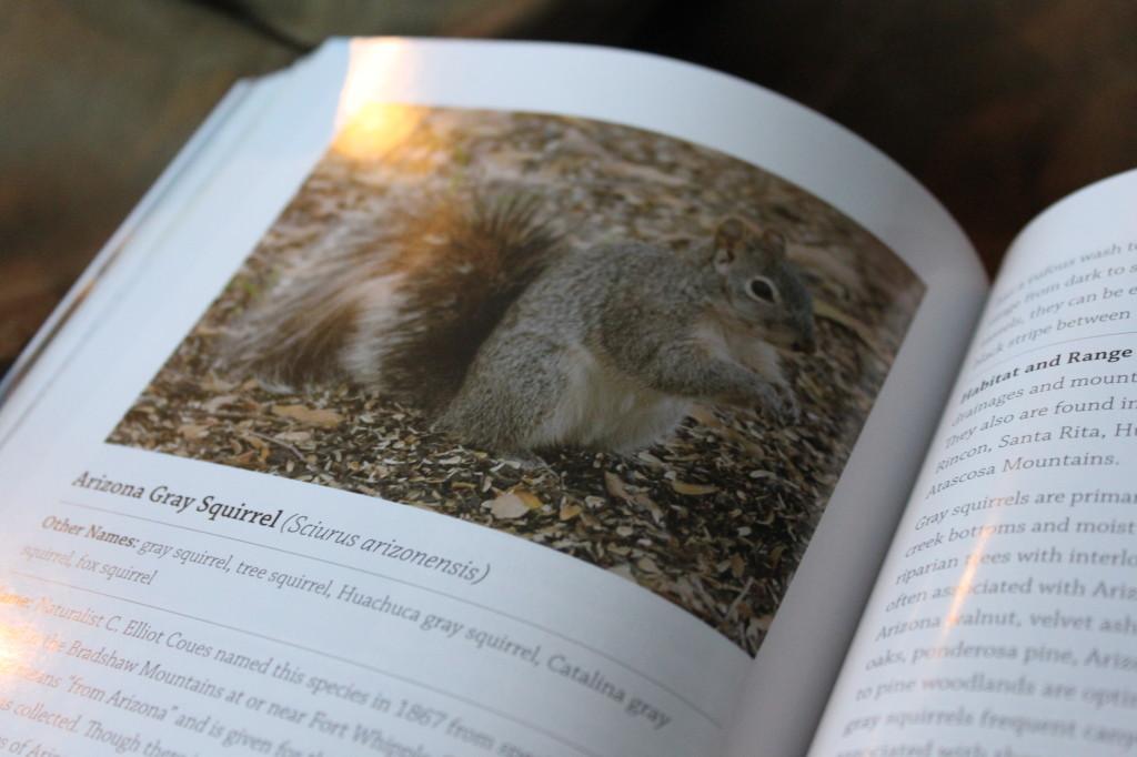 Arizona Squirrel Hunting