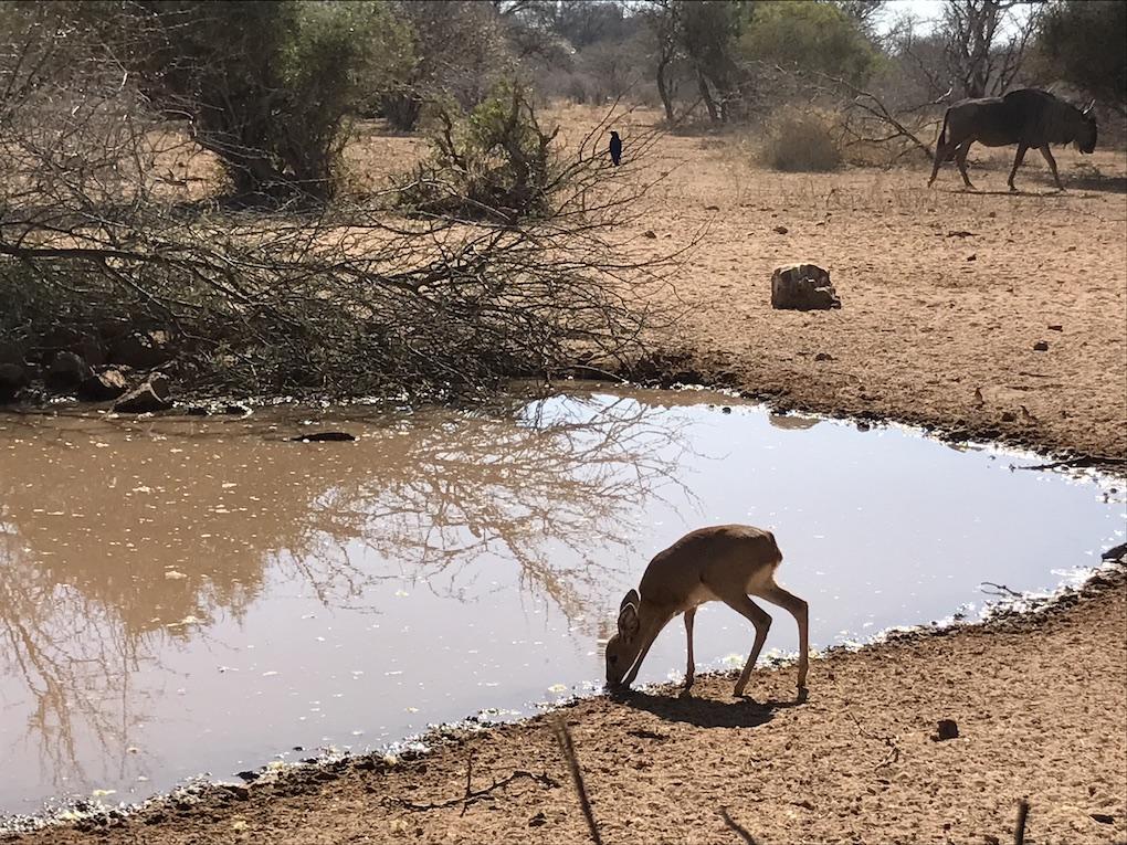 Greater Kuduland Safaris