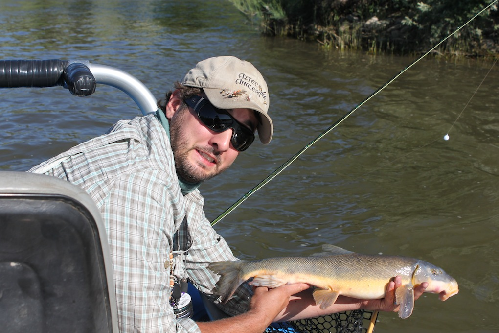Fly fishing colorado the colorado river arizona for Trout fishing in az