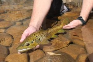 Arizona Fly Fishing